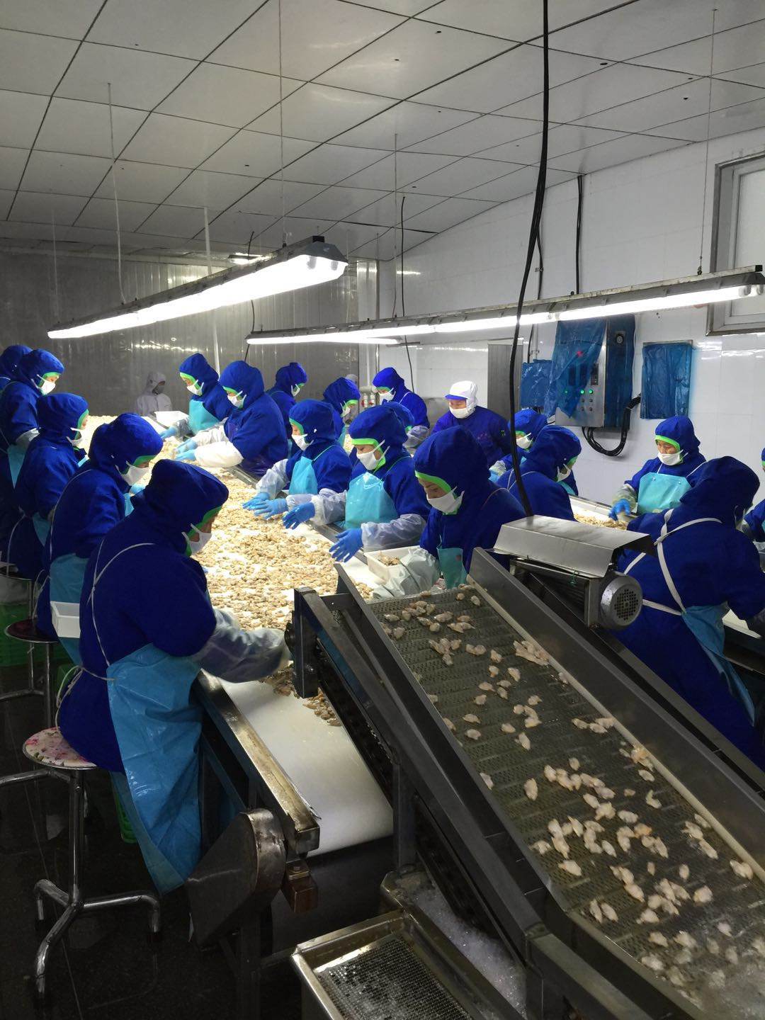 Clam Meat processing